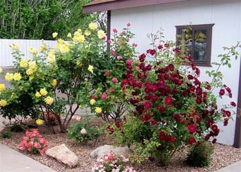 Heart Assisted Living Home In Albuquerque New Mexico Nm