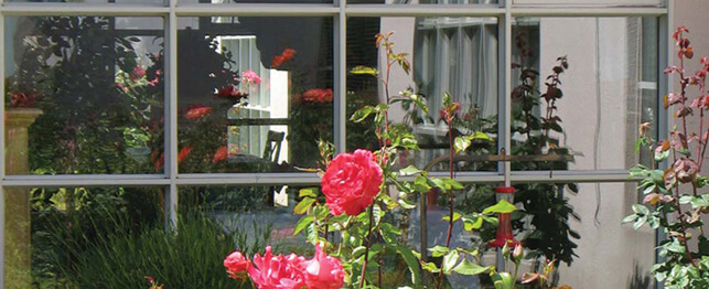 roses at Mission Villa's facility