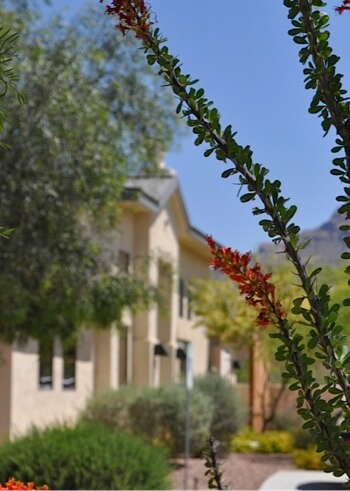 The Villas at La Canada view through flowers
