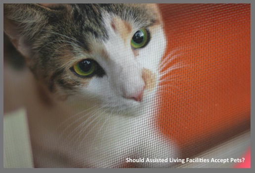 Pets in assisted living facilities